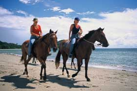 horse riding in cape tribulation