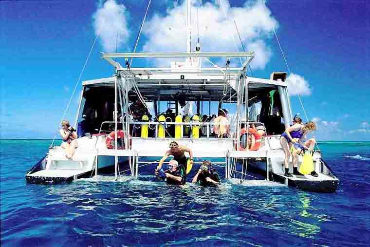 Cape tribulation scuba diving and snorkelling the great barrier in the daintree - Dive great barrier reef ...