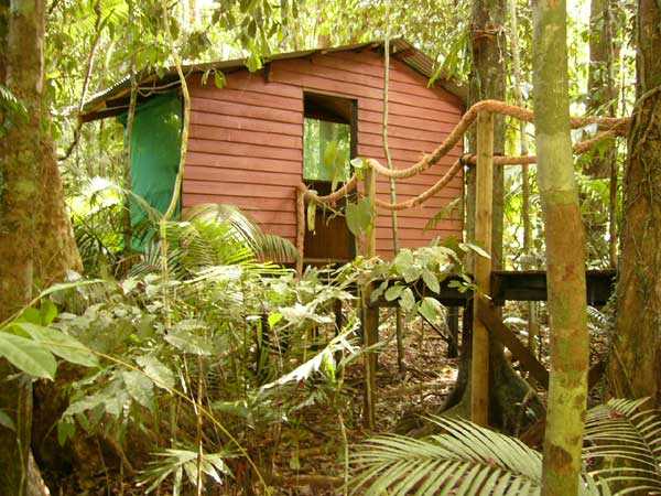 budget accommodation with style at cape tribulation rainforest hideaway