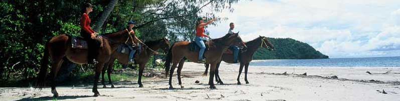 horse riding tours at cape tribulation
