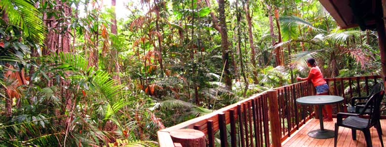 jungle accommodation in the Daintree